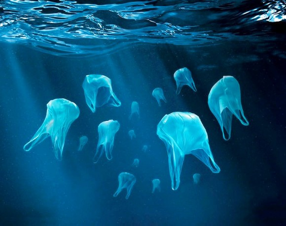 Activity related in to the International Plastic Bag Free Day