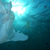 July 3rd International Plastic Bag Free Day – Spain still has some way to go